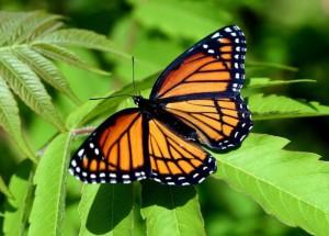 1251913637_41_butterfly_beauty
